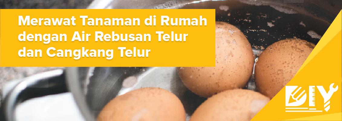 DIY Merawat Tanaman di Rumah dengan Air Rebusan Telur dan Cangkang Telur